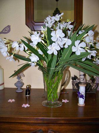 Lavoir_laurier_blanc__mugs__papillons_tueurs_017