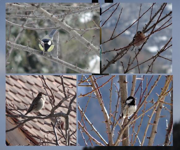 oiseaux_villard1