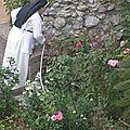 belle plante_rosine