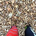 au moins 10cm, de poudreuse ? non de feuilles !