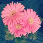 fleur-smile