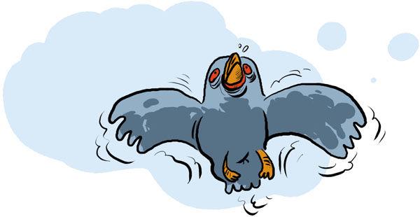 oiseau_001