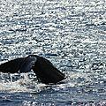 Rencontre avec une baleine...et son petit..