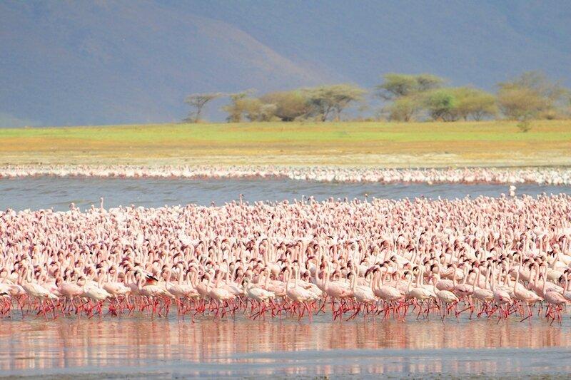 Kenya (678)