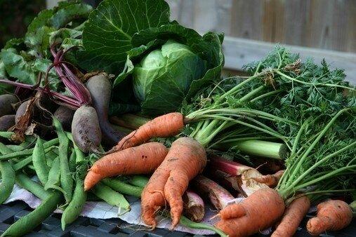 légumes-bio-d-hiver