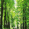 Challenge 11 ♥ aller faire une promenade dans la nature ♥