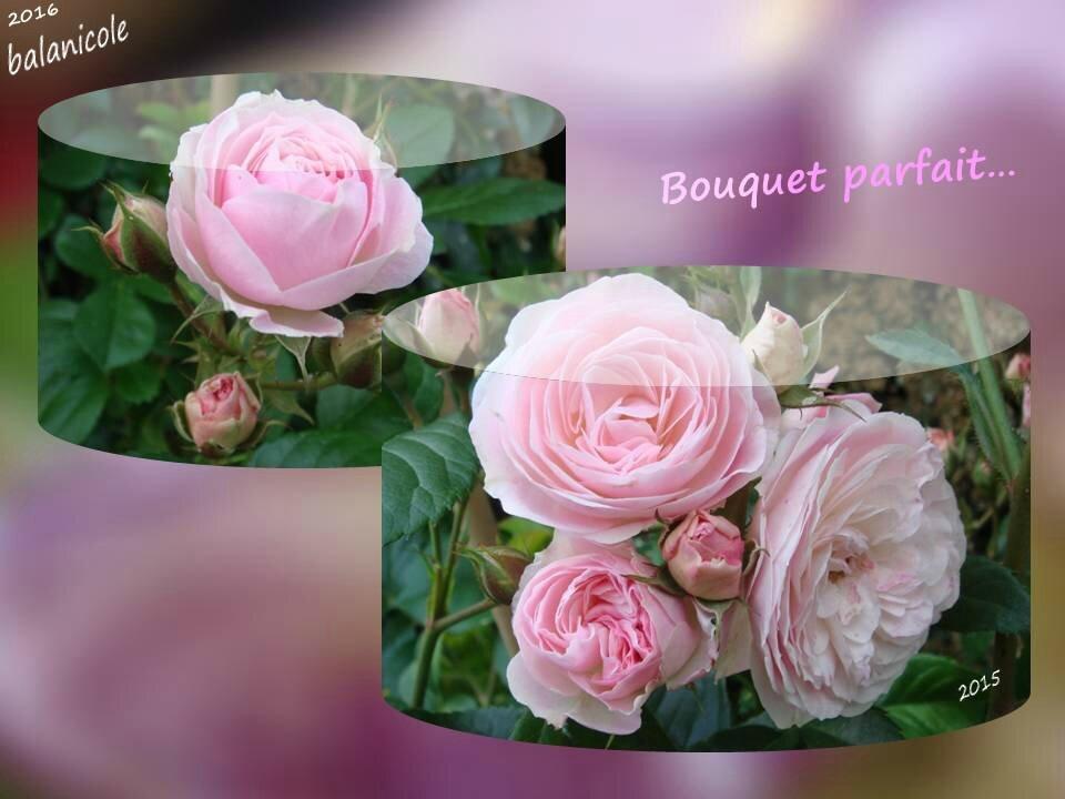 balanicole_2016_02_fevrier_rosiers1_16_bouquetparfait1