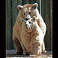 les ours10