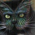 Peinture sur chat (7)