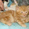 2008 04 12 Le petit chat tigré à 1 mois