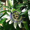 fleur passion 0449 (2)