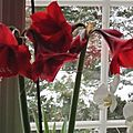 Blanche-neige en rouge et blanc - snøhvit i rødt og hvitt