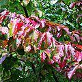 Fleurs et feuilles de Léon 270916