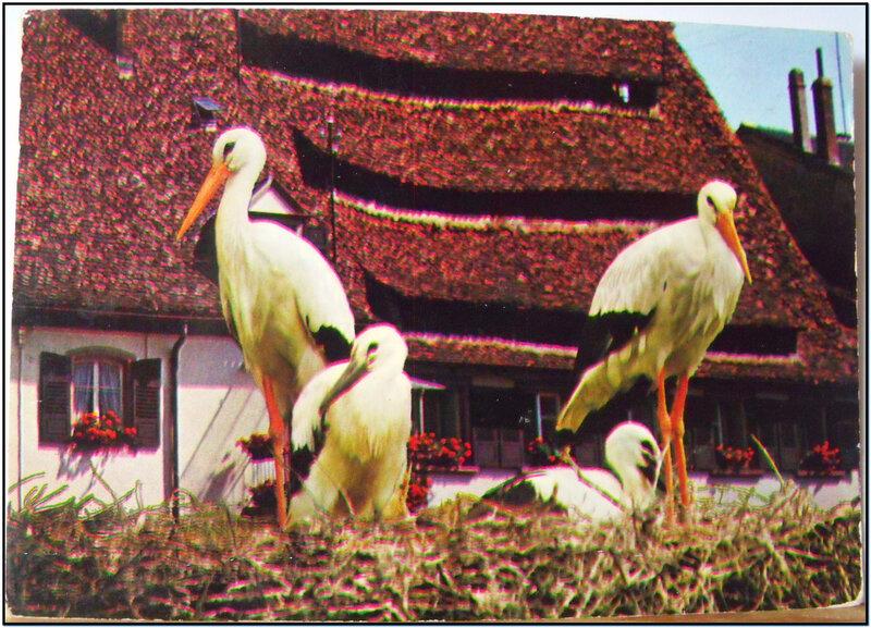 Schirmeck - Cigognes de Mr André
