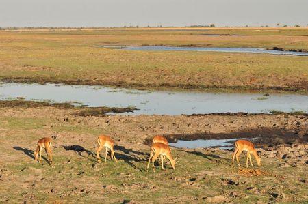 Botswana (47)