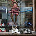 Le chat du passage d'Odessa