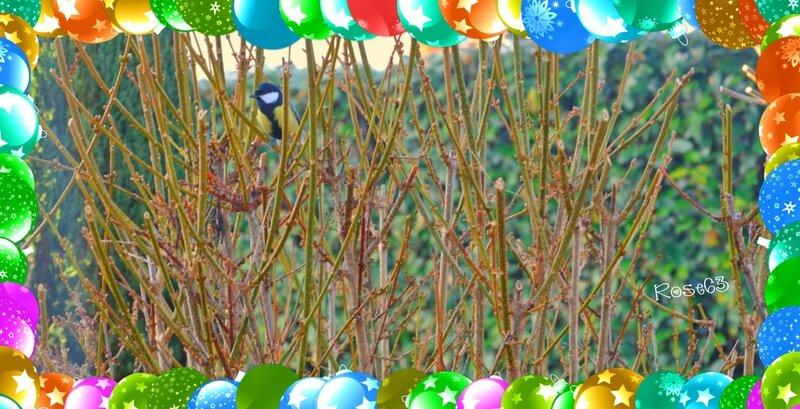 l'oiseau dans mon jardin