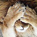 lion_7289672698578744250_n