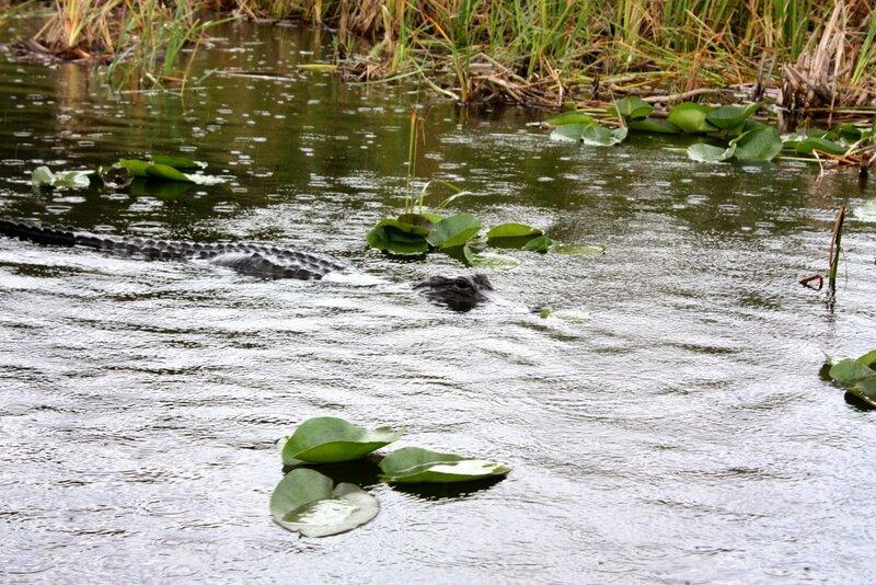J24 - 21 juillet 2014 Everglades (154).JPG