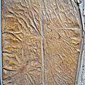 Le traité de Vitruve, De architectura 1 siècle av. J.-C., est le seul traité qui nous soit parvenu de l'Antiquité. Redécouvert à la Renaissance