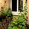 Windows-Live-Writer/jardin_D005/DSCF3885