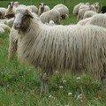 Le parcours du mouton...(tzatziki)