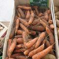 Les carottes de sable