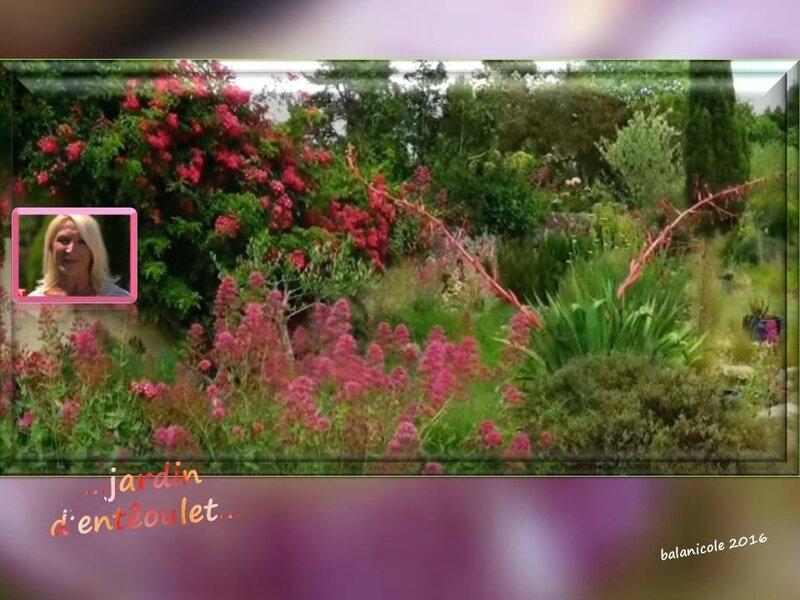 balanicole_2016_11_les nouveaux rosiers de balanicole_e comme jardin d'entêoulet_21