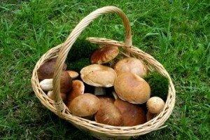 cueillette_des_champignons1_300x200