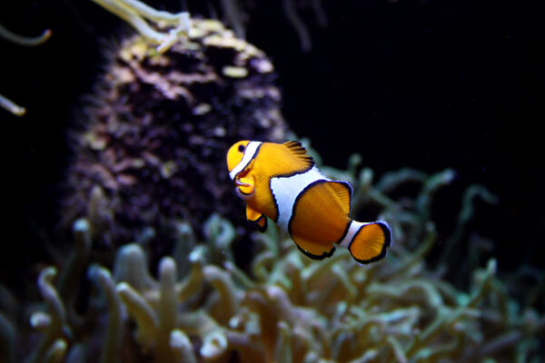 poissons-b