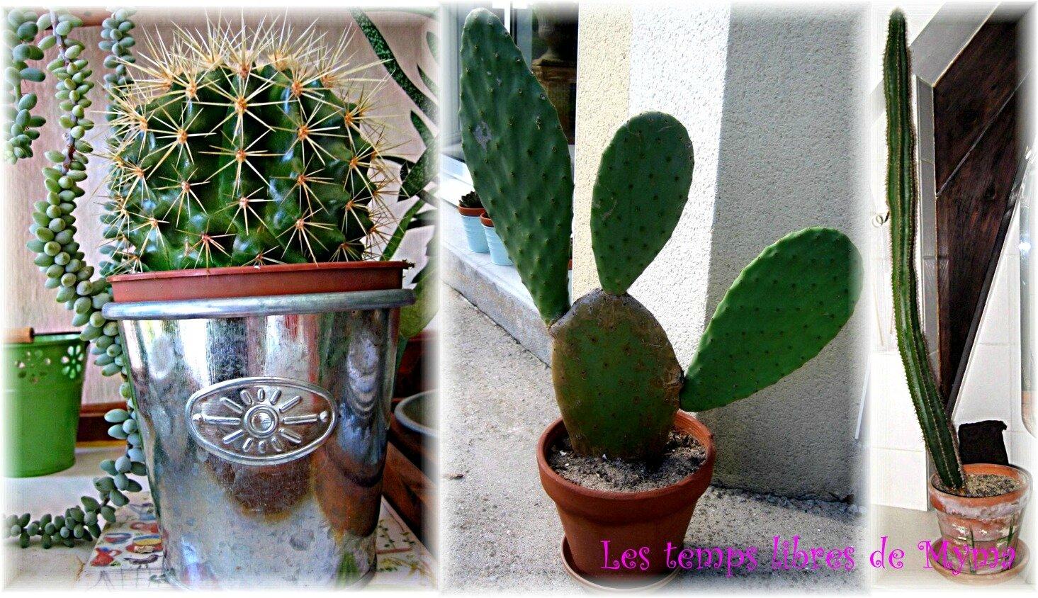 Amigurumi - Cactus au crochet