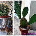 Cactus lestempslibresdeMyma