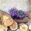 Fleurs !! le theme de la semaine du projet 52