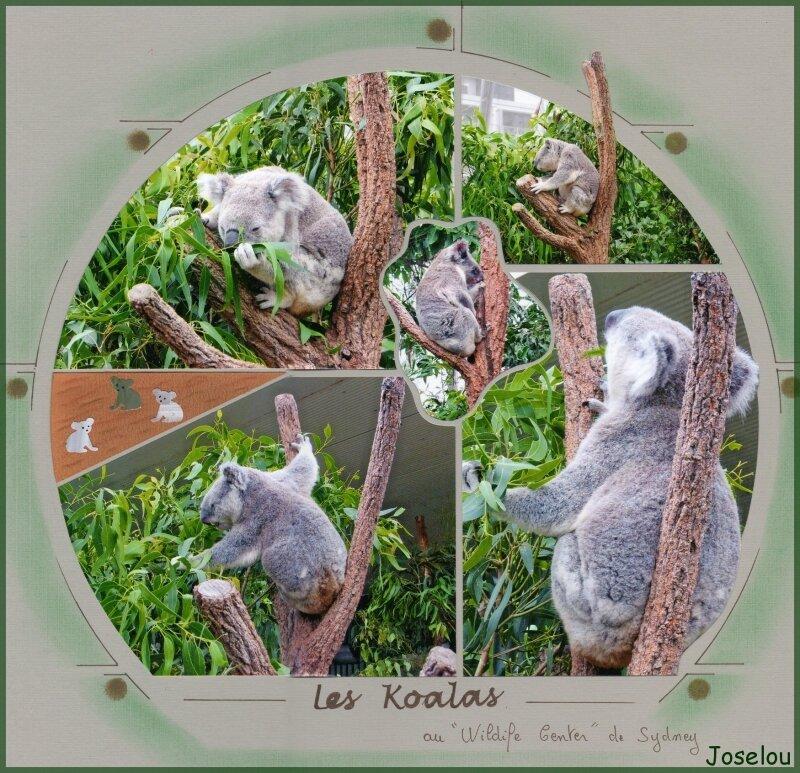 Koalas 3