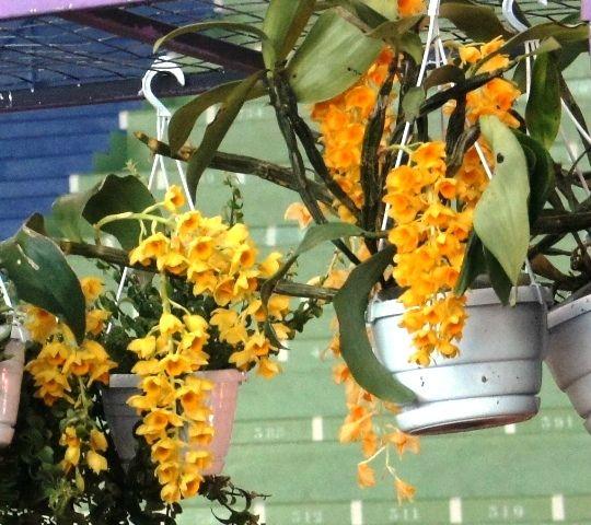 ORCHIDEE EN L'AIR