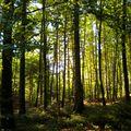 Bois d'Aglans (La Vèze) 04
