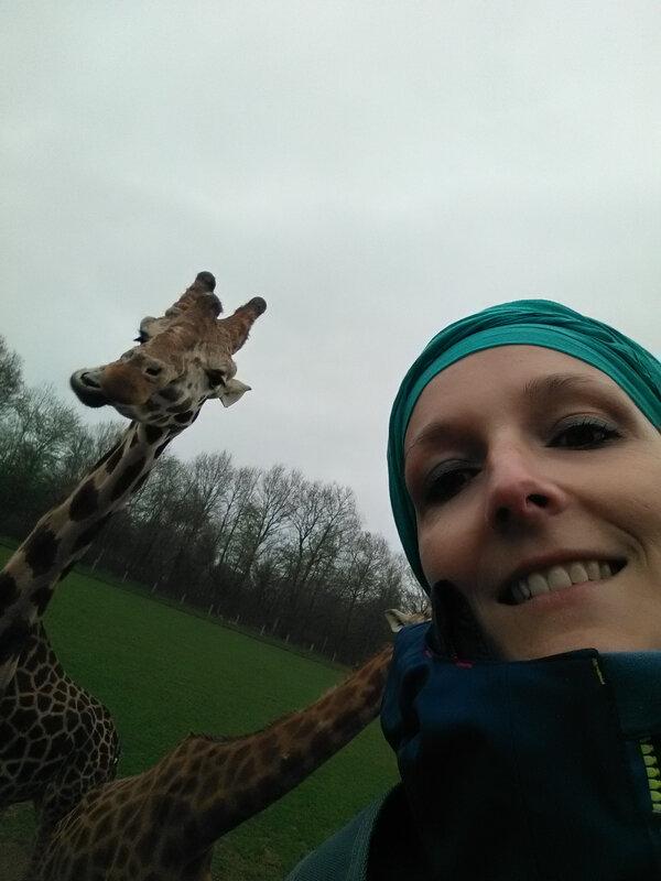 j 'adore les girafes