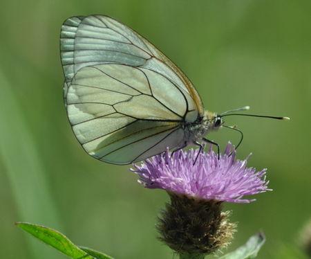 papillons_13_MAI_2011_075