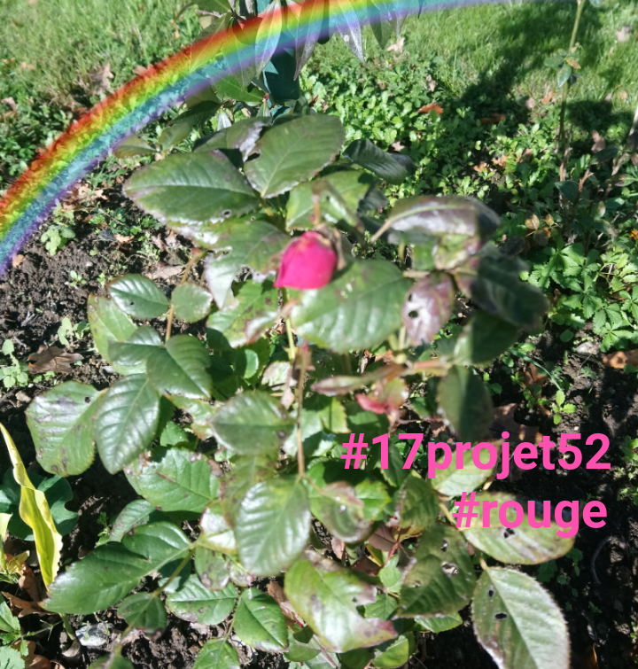 45 projet52 2017 - Rouge