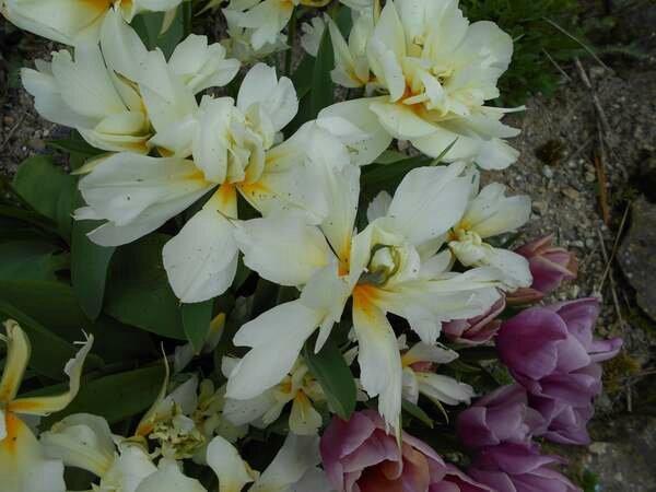 fleur166