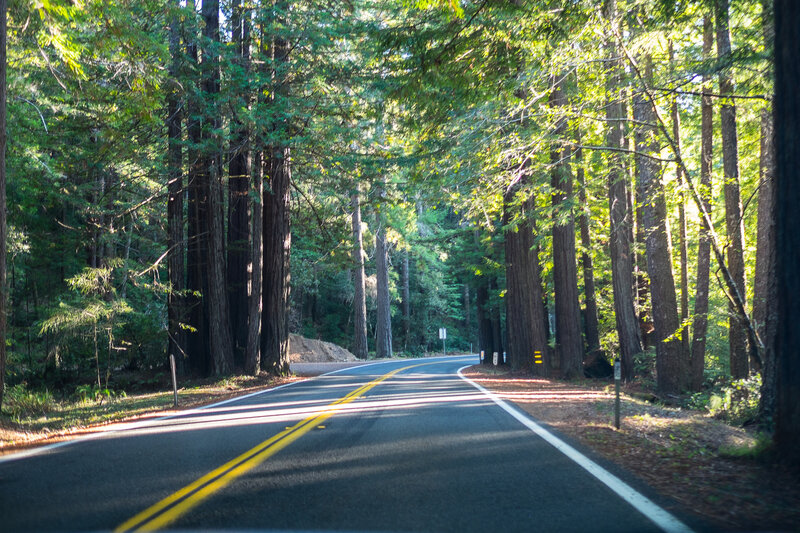 foret redwoods route 1