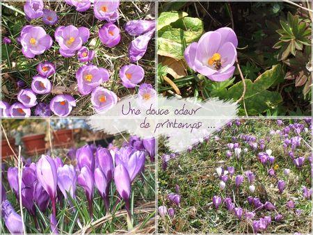 Une_douce_odeur_de_printemps