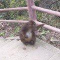 Un singe...