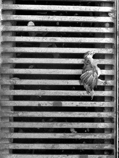 Oiseau (grille grece)blog