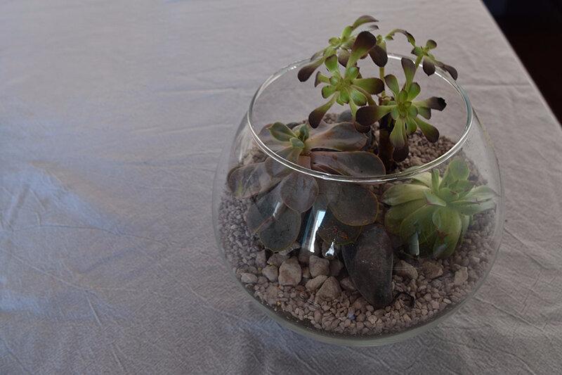 Succulentes 03