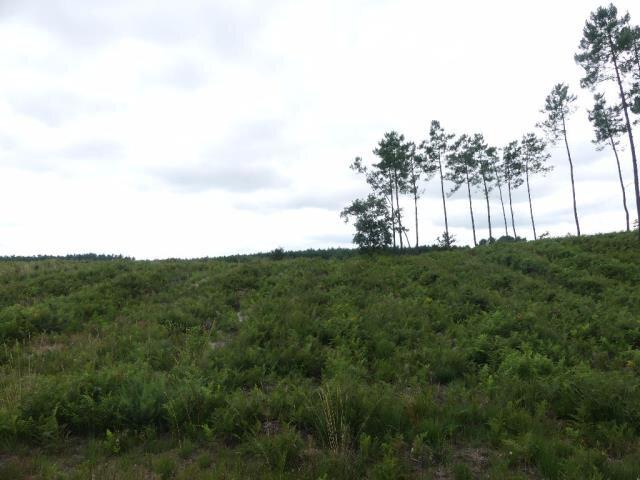 Photo-forêt-NT01