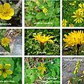 fleurs jaunes villard