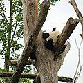 Visite au zoo de beauval!!!