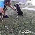 Plazza 1 chienne et ses chiots sur une plage