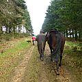 Balade à cheval dans la forêt P1080226